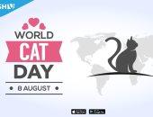 """يوم القطط العالمى.. اعرف رواد تويتر قالوا إيه عن """"ألطف المخلوقات"""""""
