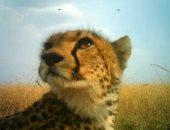 DeepMind تستخدم الذكاء الاصطناعى لمراقبة الحيوانات البرية