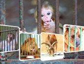 حديقة حيوان الجيزة تتخذ إجراءات لوقاية الحيوانات من كورونا والمناخ المتغير