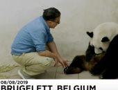 شاهد..  باندا تضع توأمين فى حديقة حيوان بلجيكية