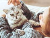 4 نصائح لازم تنفذها لو بتربى قطط فى البيت