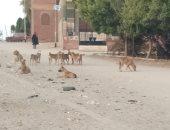 شكوى من انتشار الكلاب الضالة فى مدينة السلام ومنعها الأهالى من التسوق