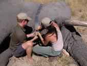 ميجان وهارى يحتفلان باليوم العالمى للفيل بصور من زيارتهما لبوتسوانا.. شوف الصور