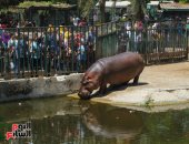 """جولة خاصة بحديقة الحيوان.. وعروض فرس النهر تبهر الزوار """"فيديو لايف"""""""