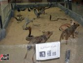 """""""متحف الحيوان"""" بانوراما الحياة البرية في مصر عبر العصور"""