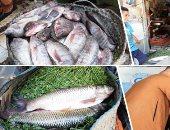 انخفاض أسعار الأسماك بأسواق الشرقية