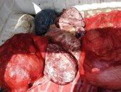 تموين القاهرة يضبط 5 طن لحوم ودجاج فاسدة قبل توزيعها بالأسواق