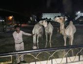 محافظ أسوان يوجه بتكثيف أعمال النظافة العامة ومصادرة 4 جمال