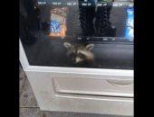 شاهد.. إنقاذ حيوان راكون حبيس ثلاجة لبيع المأكولات فى أمريكا