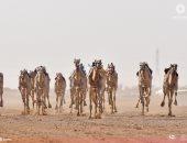 تعرف على أسماء الهجانة المصريين المشاركين اليوم بسباق ولى العهد بالسعودية