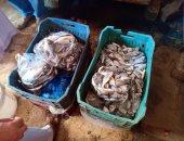 صور.. ضبط 89 كيلو زريعة أسماك و تحرير 74مخالفة تموينية بشمال سيناء والمنوفية