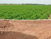 تعرف على عقوبات التعدى على الأراضى الزراعية المملوكة للدولة