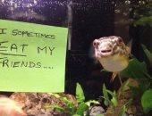 """طلعوا بلطجية.. مربو """"الأسماك"""" يفصلون بعضها فى حوض خاص بسبب سلوكها"""