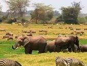 شاهد حظر بيع صغار الفيلة من إفريقيا إلى العالم