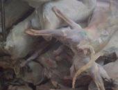 ضبط 2 طن لحوم منهية الصلاحية بثلاجات حفظ اللحوم بالإسكندرية