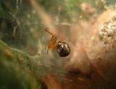 العناكب تصبح أكثر عدوانية بسبب التغير المناخى.. اعرف التفاصيل
