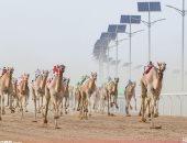 صور .. نتائج منافسات أشواط اليوم من سباق ولى العهد للهجن بالسعودية