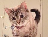 """القطة """"نالا"""" تربح 8 ألاف دولار عن كل بوست عبر حسابها على إنستجرام..فيديو"""