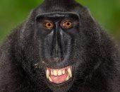 بورتريهات رائعة لقرود وشمبانزى تبرز التشابه الكبير مع البشر