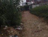 قارىء يشكو نمو البوص بجانبى طريق قرية احمد عبد الجواد بكفر الشيخ