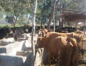 أسوان تحاصر الحمى المالطية.. حملة للطب البيطرى تجوب القرى والنجوع