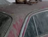 قارئ يشكو من انتشار الكلاب الضالة بشارع غرب السكة الحديد بعين شمس الغربية