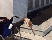 فيديو.. حاج يروى ظمأ قطة أثناء بحثها عن الماء بمحيط المسجد النبوى