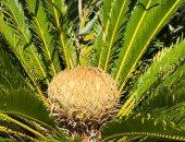 ظاهرة غريبة تحدث للنباتات ببريطانيا لأول مرة منذ 60 مليون سنة .. اعرفها