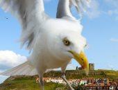 دروس فى المدارس ببريطانيا لتعليم الأطفال كيفية التعامل مع هجمات الطيور