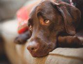لو كلبك مكتئب وحزين..3 نصائح هتساعدك على علاجه