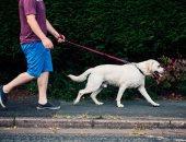 حيوانك الأليف يساهم في صحة قلبك:تربية الكلاب تمنحك القدرة علي ممارسة الرياضة