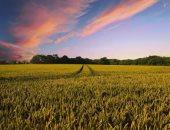 مع أو ضد حظر المحاصيل المعدلة وراثيا؟.. قضية مثارة على الساحة العلمية