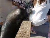 شاهد.. أسد البحر يجر فتاة إلى الماء لافتراسها ووالدها ينقذها
