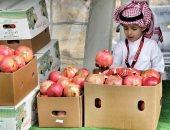 """انطلاق مهرجان """"الرمان الوطنى السعودى"""" الشهر القادم فى """"الباحة"""" بالسعودية"""