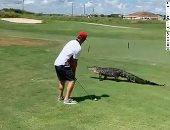 قلبه جامد..لاعب جولف يتجاهل تمساح استوائي مر بجانبه أثناء ممارسته للعبة