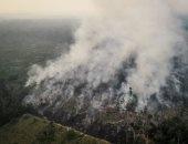 مسئول برازيلى: تدمير الأمازون لم يأخذ وقت ولكن إعادة تشجيرها تتطلب سنوات