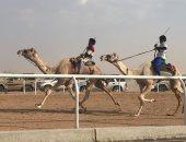 صور.. الهجن المصرية تحقق المركزين الأول والثانى فى أشواط سباق ولى العهد بالسعودية