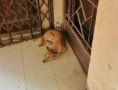 شكوى من انتشار الكلاب الضالة بشوارع مدينة العبور بالحى الأول