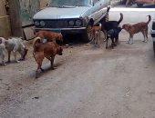 صور.. شكوى من انتشار الكلاب الضالة بشارع عاكف العباسية