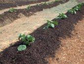 استخدام مخلفات الصرف الصحى فى زراعة الفراولة.. شكوى أهالى قرية الزعفرانى