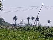 """استجابة لـ""""سيبها علينا"""".. الكهرباء ترد على شكوى قرية أم دينار بمنشأة القناطر"""