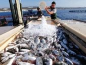 تعرف على أسباب تقدم الحكومة بقانون لتنمية البحيرات والثروة السمكية للبرلمان