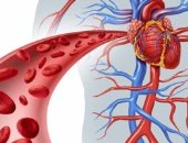 اكتشاف جزيئات عظم فى الدم تسبب تصلب الشرايين.. اعرف التفاصيل