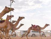 مصر تحقق مركزين متقدمين فى سباق ولى العهد للهجن بالسعودية
