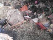 شكوى من انتشار القمامة بشارع القواس البر الغربى فى شبين الكوم