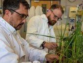 """باحثون يكتشفون """"جين"""" يمكنه حماية المحاصيل الزراعية من الجفاف وتغير المناخ"""