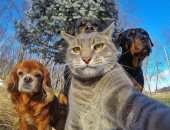 """خبراء يحذرون: صور """"السيلفى"""" تضر الحياة البرية وتؤثر على سلوك الحيوانات"""