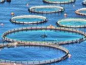 19 اختصاصا لجهاز حماية البحيرات والثروة السمكية فى القانون الجديد