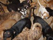 إعصار دوريان يجمع 97 كلبا في بيت واحد.. إعرف التفاصيل