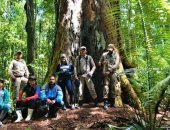علماء برازيليون: أطول شجرة فى غابات الأمازون تنجو من الحرائق